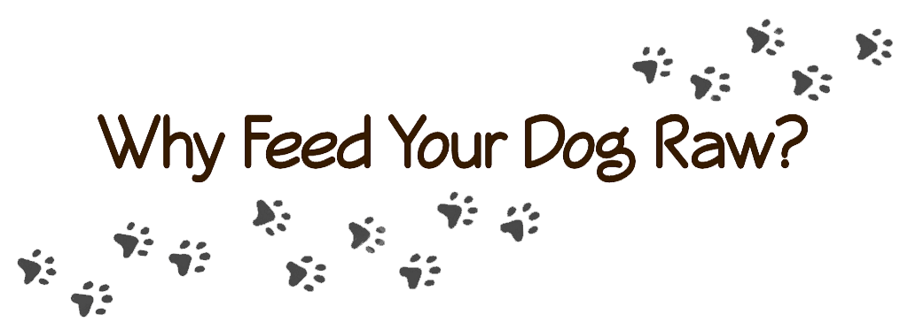 why feed your dog raw